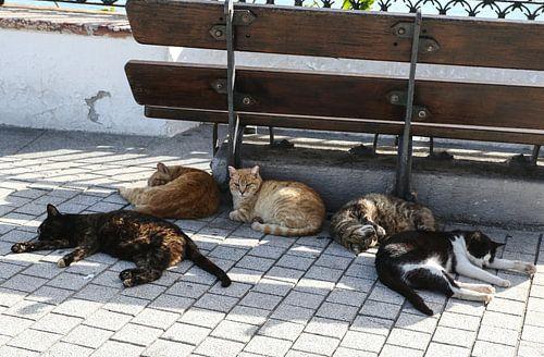 katten slapen onder een bankje