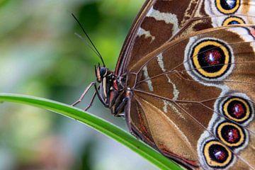 Vlinder van Ineke Wildeboer