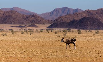 Lonely Oryx van Steven Driesen