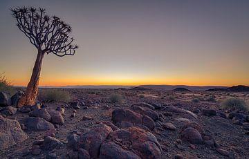 kokerboom bij zonsondergang van Ed Dorrestein