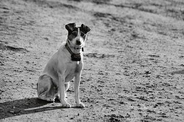 Boerenhond van ZEVNOV .