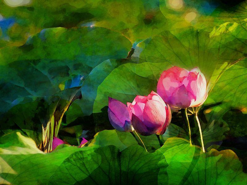 Water lilys 2021 von Andreas Wemmje