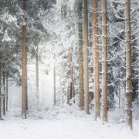 Une scène d'hiver. Dwingelderveld, Drenthe. sur Ton Drijfhamer