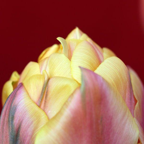 Tulp close-up van Erik Wouters