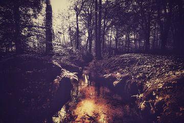 Autumnmood - 1 sur Rob van der Pijll