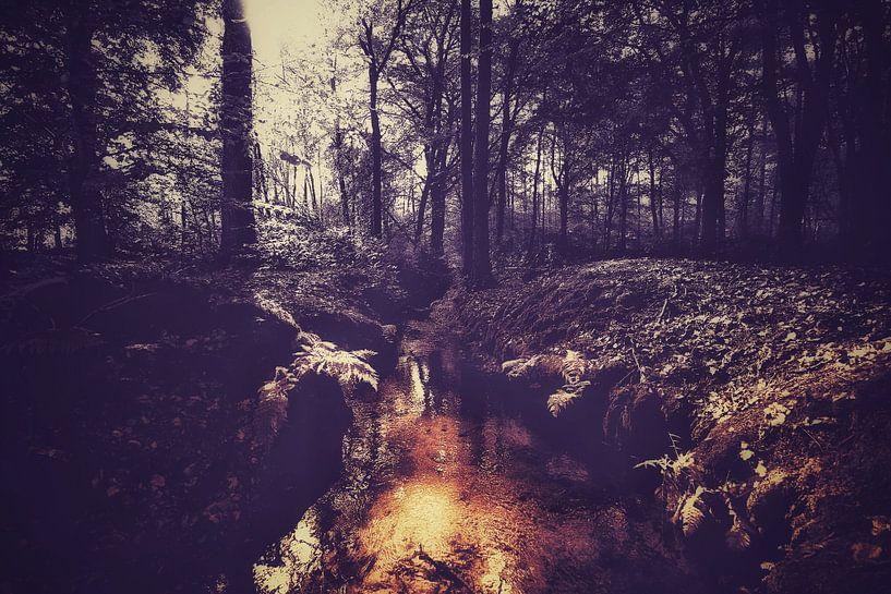Autumnmood - 1 van Rob van der Pijll
