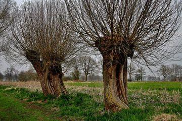 Twee wilgen bomen in de winter. van Hans Jansen