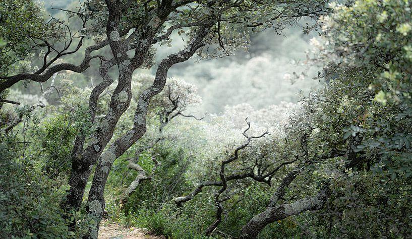 1683 Walking in the Provence van Adrien Hendrickx