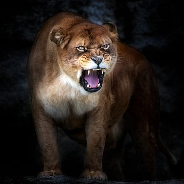 Lion portrait, Santiago Pascual Buye van 1x