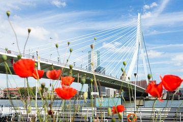 Klaprozen bij de Erasmusbrug in Rotterdam sur Michel van Kooten