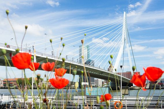 Klaprozen bij de Erasmusbrug in Rotterdam van Michel van Kooten