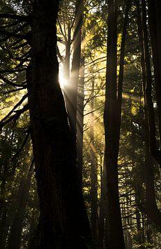 zonnestralen von Fotografie door Menno