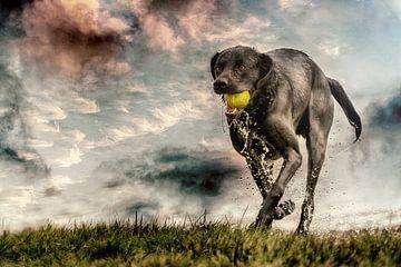 Hond speelt met bal van Marcel Kieffer