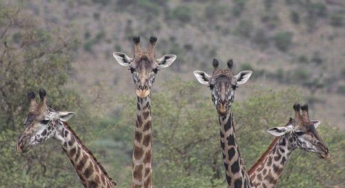 Giraffe Quartet van BL Photography