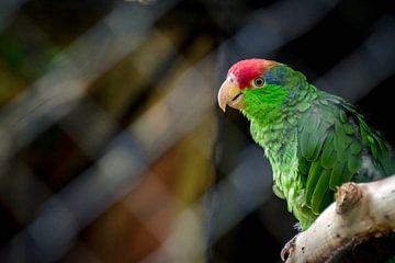 Vogel van Lonneke Prins