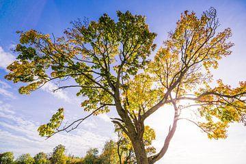 Herfstboom met tegenlicht von Martin Frunt