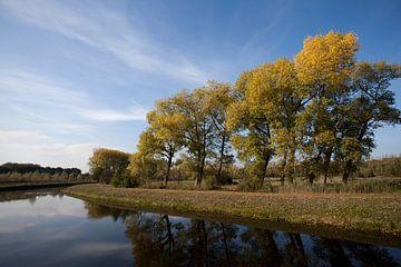 Bomen langs de Dommel, Brabant van Kees van Dun
