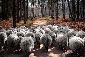 Schafe auf der Straße von Peter Mensink