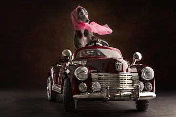 Doggy ride van Nuelle Flipse