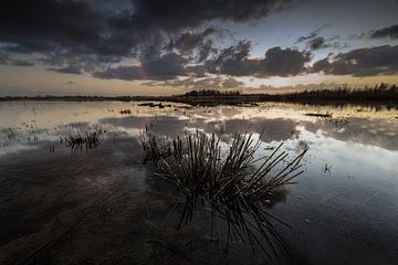 Sonnenuntergang im Biesbosch. von Rick Ermstrang