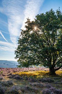 Baum auf dem blühenden Heidekraut von Martijn Joosse