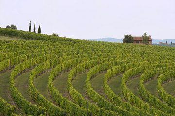 Wijngaard in de Chiantistreek van Barbara Brolsma