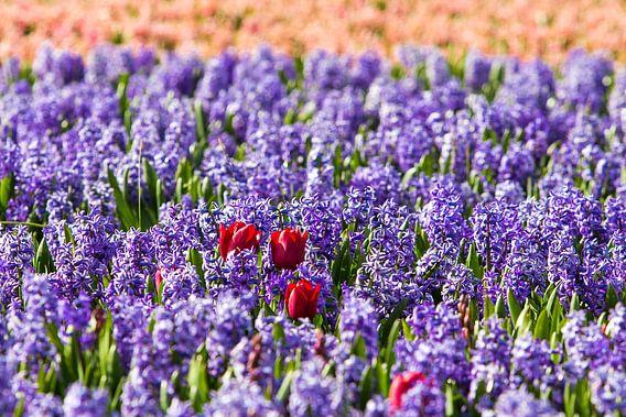 Verdwaalde tulpen van Sjoerd Tullenaar