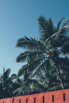 Sri Lanka Palme von Karlijne Geudens