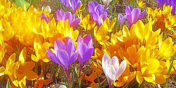 Frühlingserwachen van Ramon Labusch