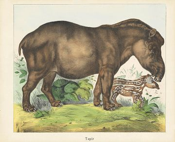 Tapirus, firma Joseph Scholz, 1829 - 1880