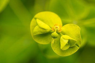 Bloem in groen von Floris van Woudenberg