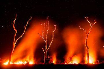 Grassland on fire in the Pantanal sur AGAMI Photo Agency