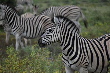 Zebra Botswana von Carlijn Hattink