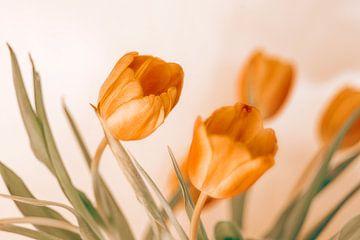 dichte rode tulpen van Michael Schulz-Dostal