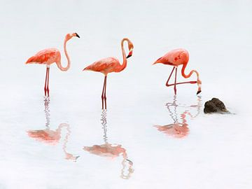 Flamingos von Peter Mensink