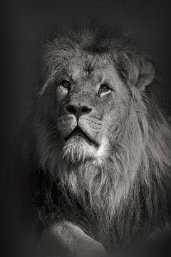 Portret van een leeuw. van Michar Peppenster
