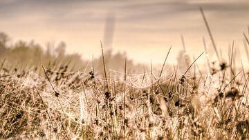 Glanzende spinnenwebben vol ochtenddauw in het zonlicht van Fotografiecor .nl