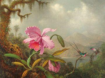 Orchidées et colibris, Martin Johnson Heade