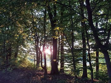 Zon door de bomen van Joelle van Buren
