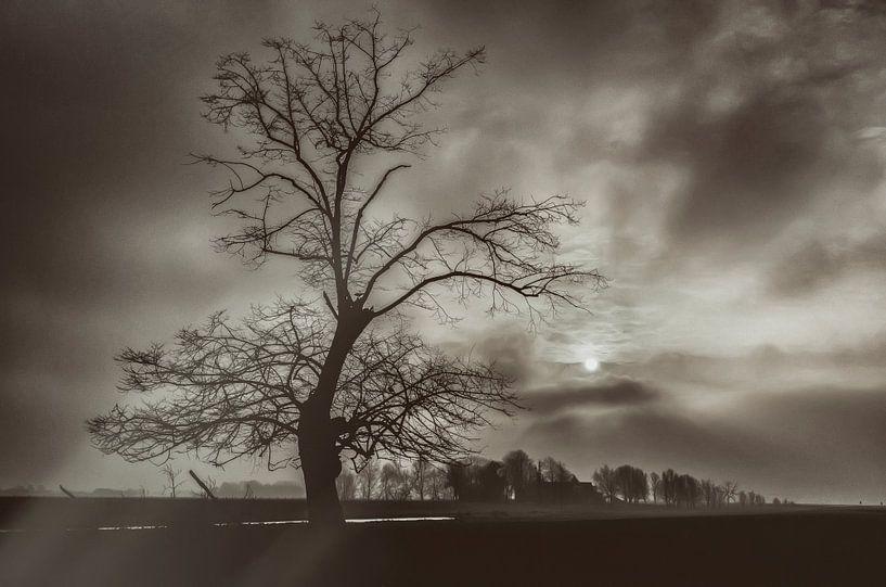 Oude boom solitair van Ellen Driesse