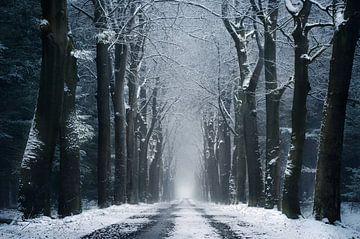 The infinite road sur Rob Visser