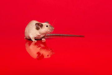 Nette Dichtung Punkt Hausmaus auf einem roten Hintergrund von Elles Rijsdijk