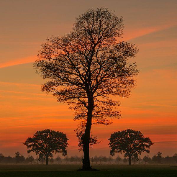 Sunset Tree II van Martin Podt
