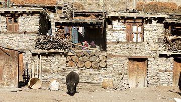 'Yak', Manang- Nepal van Martine Joanne
