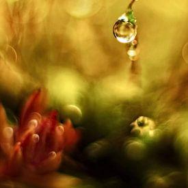 In the small big dream forest von Marlies Prieckaerts