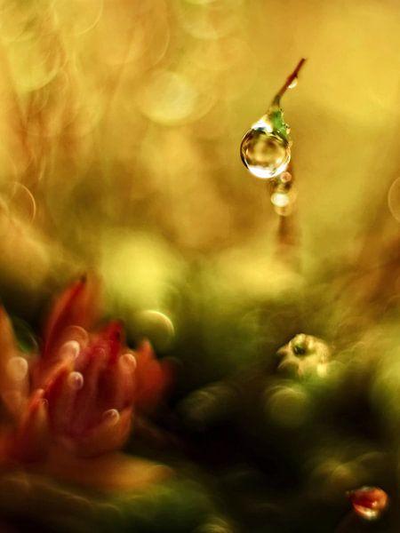 In het kleine  grote dromen bos van Marlies Prieckaerts