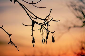 silhouette des branches sur Tania Perneel