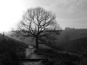 Tree von Nan van Elburg