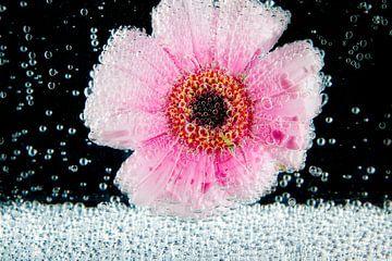 Frisse bloem von Catching Colors