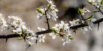 Der Frühling kommt von Hanneke Luit